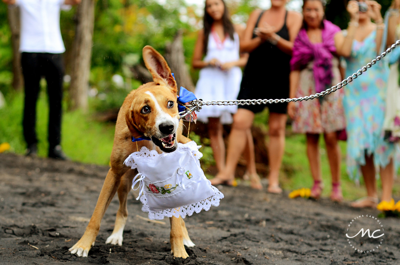 Dog ring bearer. Playa Hermosa, Costa Rica Wedding. Martina Campolo Photography